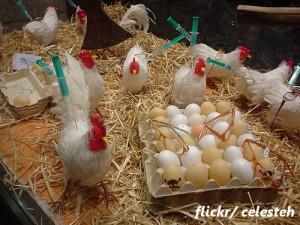 中国「鳥インフル」死者3人に 当局対応の賛否が別れる理由とは