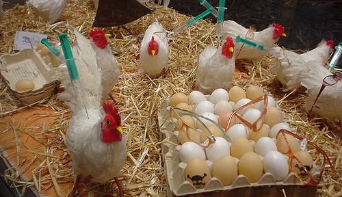 中国の鳥インフルエンザ 専門家はヒト間感染を懸念