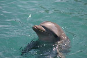 イルカ漁の町、「海洋公園」オープンへ 海外から賛否の声