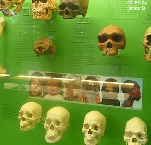 歴史が変わるかも? 40万年前の人類DNA解読で、定説見直しか
