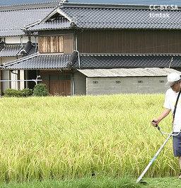 rice_re