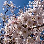 宇宙から戻った桜、6年早く開花…植物の成長プロセスを変えるその要因とは