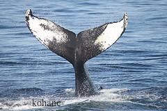 """日本の捕鯨、""""脅してでもやめさせろ"""" ニュージーランド野党が過激批判"""
