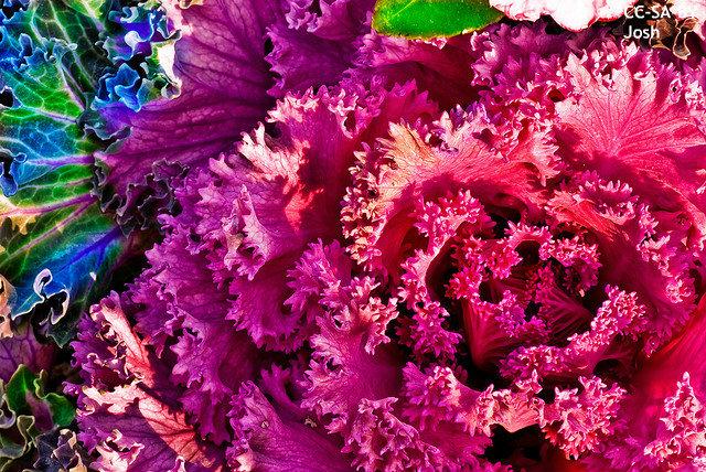 2ヶ月もつ無菌レタス!?  富士通、東芝…野菜工場で栽培 海外紙も注目