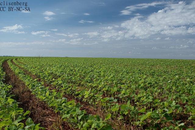 日系パラグアイ人、非遺伝子組み換え大豆を日本へ 輸出第4位の礎を築く