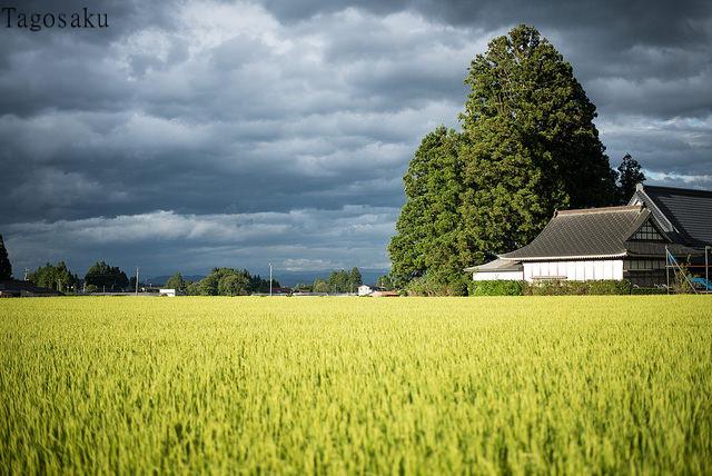 60年ぶり農協改革、「安倍首相は形だけの勝者」? 海外メディアは踏み込み不足を懸念