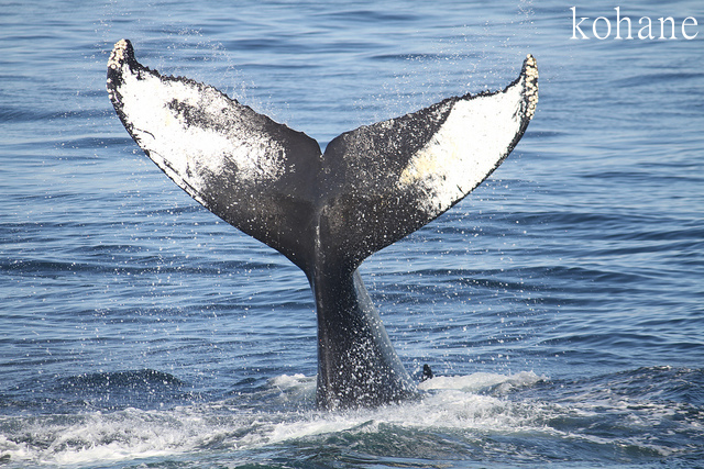 """""""捕鯨禁止は着物禁止と同じ"""" 日本の反捕鯨国への反論、海外メディア注目"""
