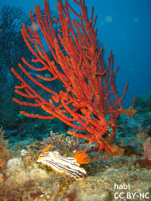 小笠原の中国船サンゴ密漁、日中首脳会談の障害に? 台風迫る中、動向に海外も注目