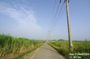 沖縄のさとうきび畑