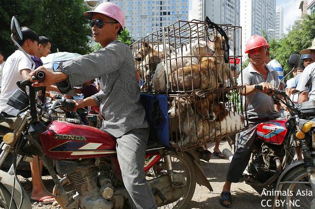 """中国「犬食祭」に世界からブーイング """"大量絶滅時代""""にあるべき動物保護とは?"""