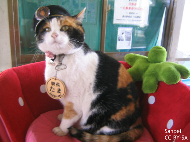 「たまは神になる」世界が駅長の死を報道 広がる日本の猫文化、強力な観光資源に