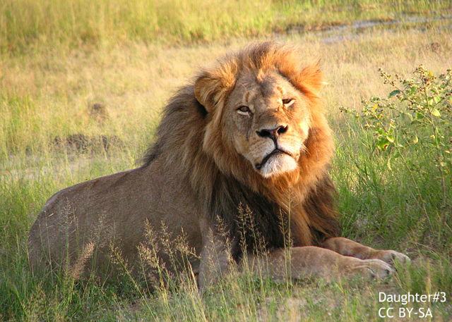 """狩猟は許されるべきか?海外で論議 """"合法化は動物保護につながる""""という見方も"""