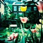 オランダでベーシックインカム実験へ 世界が注目