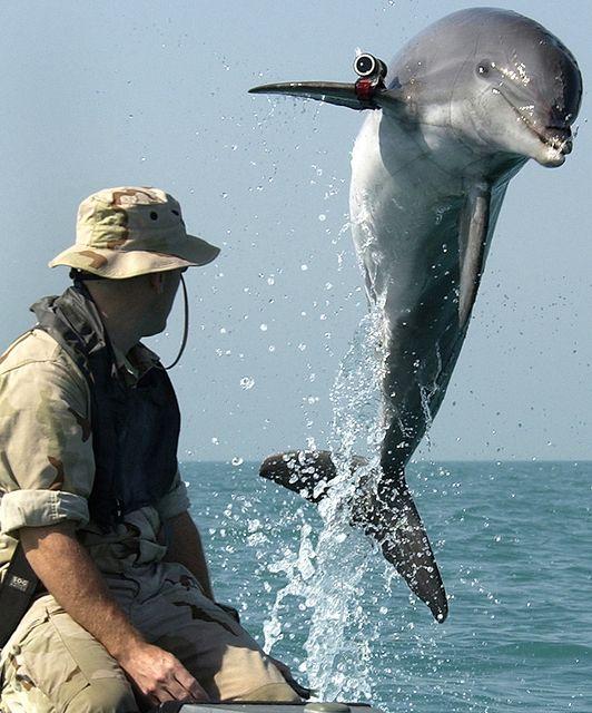 ロシアがイルカの軍事利用を再開か 米軍はアシカも研究・訓練 利用される動物たち