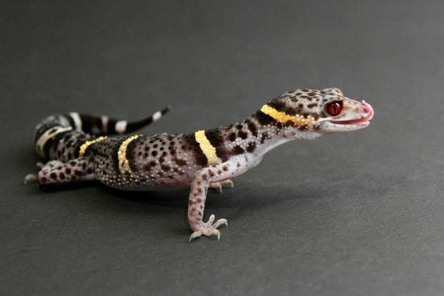 Naturesauraphoto / Shutterstock.com